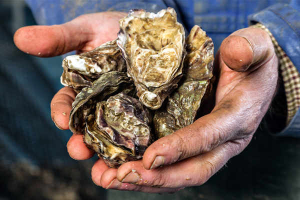 Buy fresh oysters online Recipes and Advice